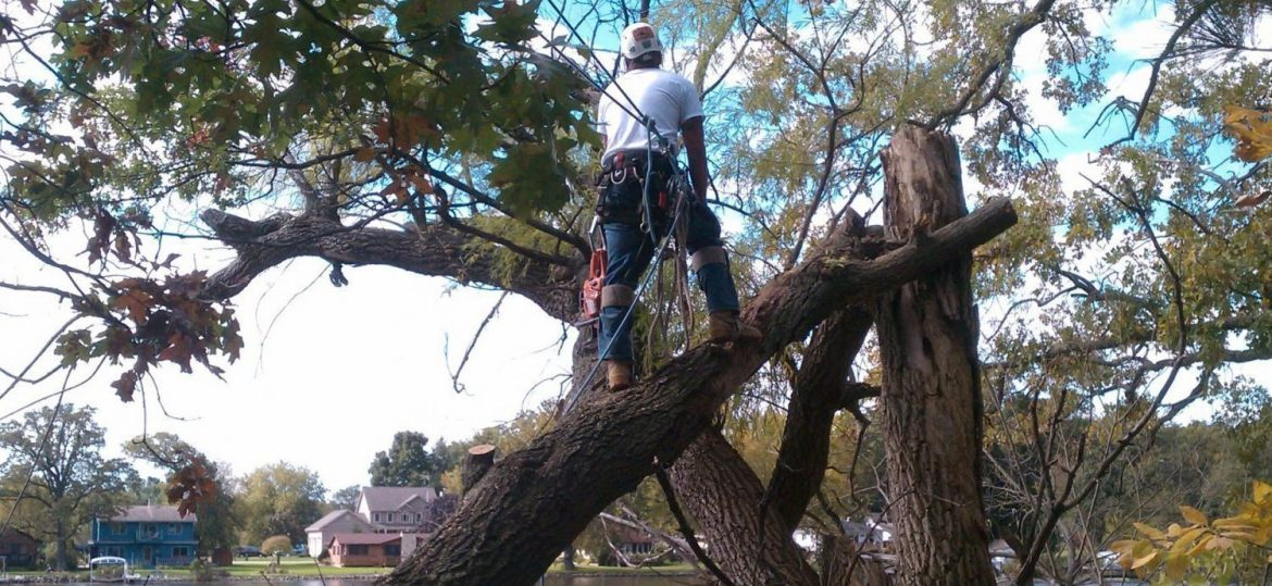 What Mistakes You Should Avoid When Hiring a Tree Remover