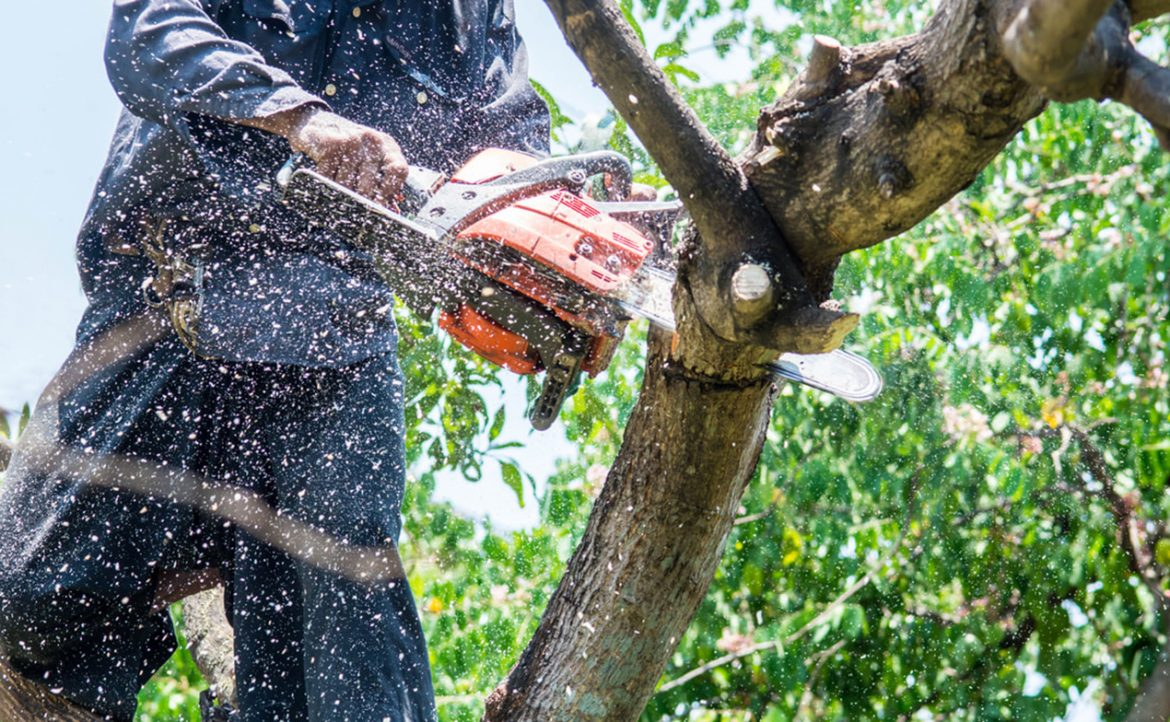 Steps to Hiring a Good Tree Service Company