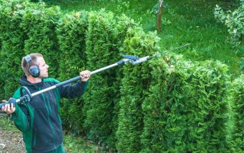 tree trimming service yelp
