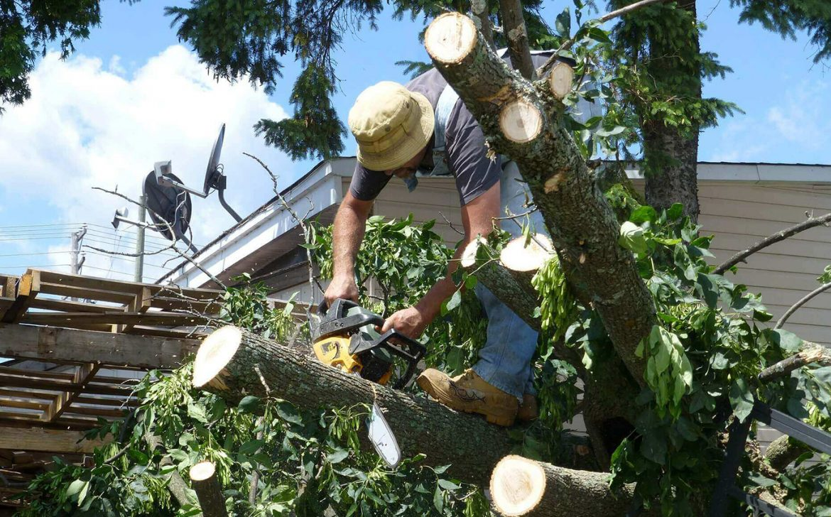 Beginners Guide to Tree Pruning