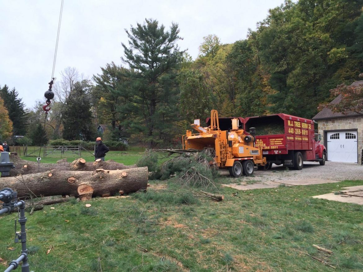 Signs You Need to Hire Tree Removal Company