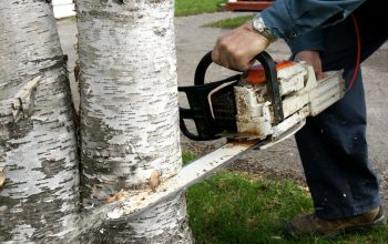 best tree care services near me