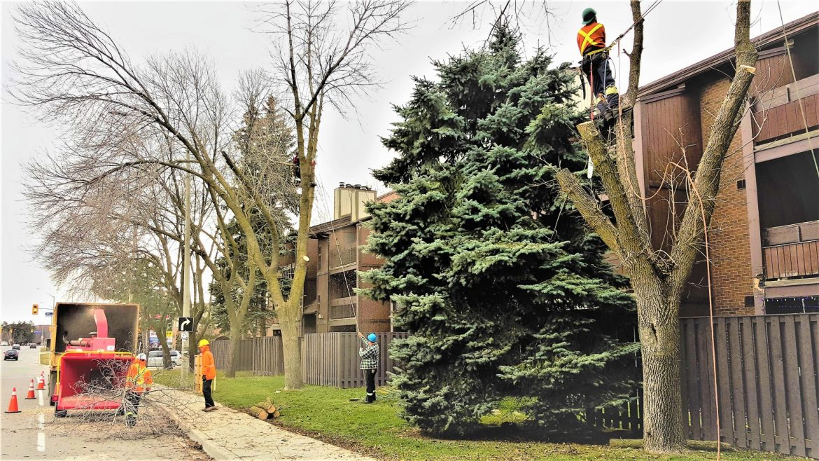 Why You Should Carefully Vet Tree Removal Experts